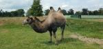 Blairdrummondsafaripark16-1